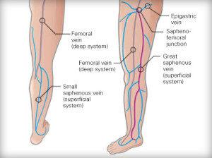 venous-anatomy-Image-300x224