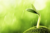sprout-1136131_960_720